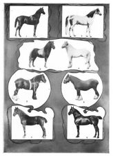 HORSES. Arabian; Stallion; Shetland Pony; Welsh; Shire; Clydedale Gelding 1907