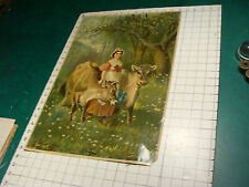 Original Vintage print: 1880's JERSEY cows, H. Kallett out of Maine, V COOL