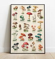 Mushroom WALL ART Print, Mushroom Artwork, Vintage Mushroom, Home Decor