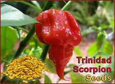 Scorpion Pepper Seeds -50 Seeds To Grow Scorpion Plants  (High Germination Rate)