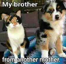"Australian shepherd and cat refrigerator magnet 3 1/2 x 3 1/2 """