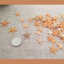 20 pcs Tiny Size Dried Real Starfish Flat Sea Star Ornament Crafts Decorations