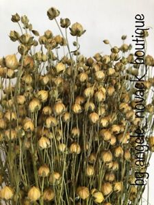 """85 GRAMS DRIED FLAX FOR FLOWER ARRANGING READY TO USE HARVEST COUNTRY 18"""""""