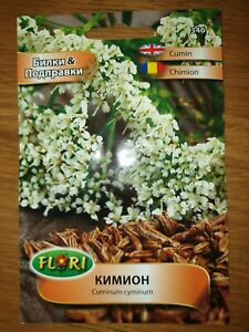 Cumin Herb & Spices Gourmet Edible Home Grown Plant 300 seeds