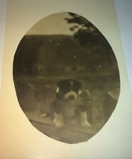 Rare Antique American Cute Puppy Dog Sitting On Fence! Real Photo Postcard RPPC!