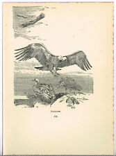 Vultures 1922 Vintage Bird Print by Roland Green Picture #133