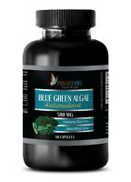 Organic BLUE GREEN ALGAE Powder 500mg - Spirulina Klamath Lake - 1 Bottle