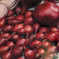 1 KILO PIROSKA RED ONION SETS