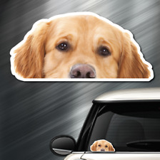 (1) Golden Retriever DOG Peeper Sticker Window Peep Decal Car Auto Puppy AKC NEW