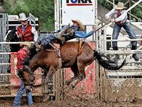 RODEO ART PRINT Let er Rip (color) Barry Hart Cowboy Horse Western Poster 13x19