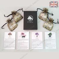 Rare Bonsai Tree Gift Box, Multiple Viable Seeds Instructions, UK Unique Custom