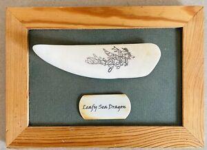 Hand carved Scrimshaw Leafy Sea Dragon In A Cedar Frame