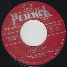 BIG MAMA THORNTON I Smell A Rat PEACOCK 7 45 Re. Boss Hip-Grinding 1954 R&B HEAR