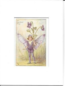 Cecily Mary Barker THE DOG VIOLET FAIRY Mounted Vintage Print 1920s