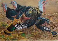 Karl Adser 1912-1995 - Wildputen - Indian Chickens - Boy Turkey - Birds Zoo