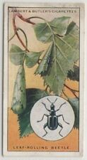 Leaf Rolling Beetle Insect 85+ Y/O Trade Ad Card
