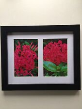 """Bright Pink Tropical Flowers Framed Flower Photos 11.25"""" x 9.25"""""""