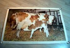 """Schulwandkarte """" Kuh und Kalb"""" Der Neue Schulmann Nr. 4210 Lehrkarte Selten"""