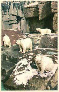 ?Vintage Postcard 1920's The Polar Bear Enclosure The Zoo Copenhagen