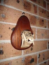 Peccary Half Skull Taxidermy Animal Pig
