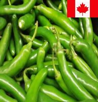Hot Pepper Seed 60+ Seed : SERRANO Heirloom Non GMO Great for Salsa
