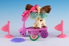 Littlest Pet Shop Chihuahua #385 Brown & Cream White w/Purple Eyes + Accessories