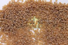 10/0 Old Time Vintage Venetian Trans Gold Unfinished  #20  Seed Beads/1oz