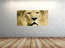 Alu-Dibond Bild ALU100500400 LÖWEN AFRIKA FARBIG 100 x 50 cm Wandbild TIERE