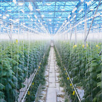 Pflanzspule Rankspule Tomaten Rankhilfe 2er Set 15m Gemüsepflanzen