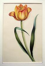 FLOWERS ETC A TULIP JAMES JANES ELIZABETH AMBROSE ARCHIVE (2) W/COL C1830