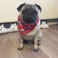 Handmade Dog Bandana - Tie around neck - Pug fabric - Red or Pink