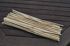 20 Stück Pflanzstäbe Bambusrohr China Schilf Riesen Miscanthus 100 cm handarbeit