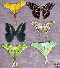 Butterfly Moth Magnets Set of 6 Multi Color Insects Refrigerator Magnets