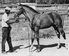 SECRETARIAT - ORIGINAL 1970 JOCKEY CLUB ID HORSE RACING PHOTO!