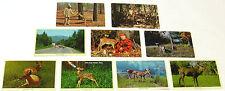 1940s 1950s 1960s Postcards ~ DEER, Fawns, BUCKS ~ 40+ Postcards ~ FREE SHIPPING