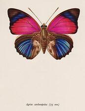 BUTTERFLY Illustration Print Butterfly Wall Art Regal Bates Butterfly 728