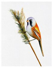 Bearded Tit Bird Watercolour Painting A4 Signed Limited Edition Print Reed Bird