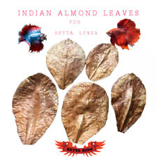 25Pcs INDIAN ALMOND LEAVES Betta Tank Aquarium Environment