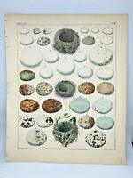 Antique large hand-colored print 1843.Oken's Naturgeschichte Plate 2 Nests Eggs
