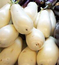 50 CASPER WHITE EGGPLANT Solanum Melongena Fruit / Vegetable Seeds *Combined S/H
