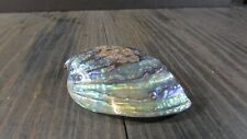 New Zealand Paua Shell - 5 inch Half Shell Vivid rainbow exterior Hand Polished