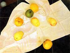 Russian Art Leonid Chupyatov Mural Lemon Apples Tumbled Marble Tile #687