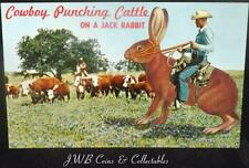 Vintage Comical Postcard of a Cowboy Punching Cattle on a Jackrabbit