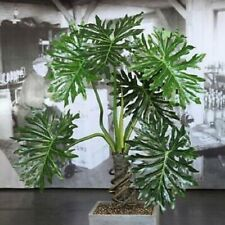 *Philodendron Selloum*   -    Lacy Tree    -    10/50/100/250 seeds