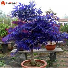 AA Rare Blue Maple Seeds Maple Seeds Bonsai Tree Plants 10 pcs