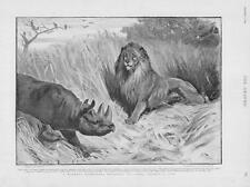 1893 Antique Print - ANIMALS Rhinoceros Lion  Parker Gillmore Charlton   (301)