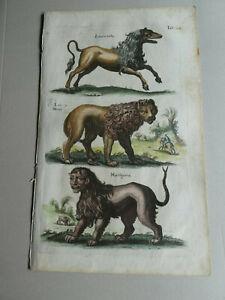 1652 Mythical animals: Manticore,Crocuta, Leo  Merian/Jonston Historiae Naralis