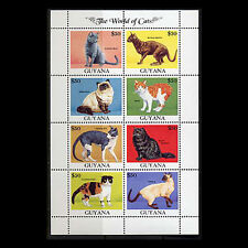 Guyana, Sc #2588A, MNH, 2000, S/S, Cats, Topical stamps, FADDAS8Z