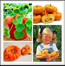 10 Pcs Seeds Rare Mini Pumpkin Plants Bonsai Organic Fruit Vegetable Home Garden