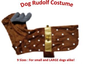Dog Rudolf